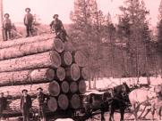 Forests, Forestry, and the Timber Products Industry